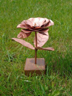 peony copper flower