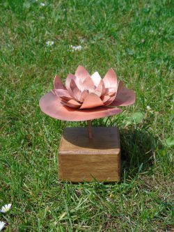 waterlily copper flower