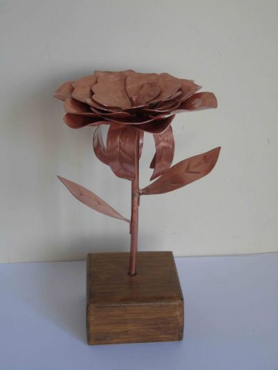 dahlia copper flower